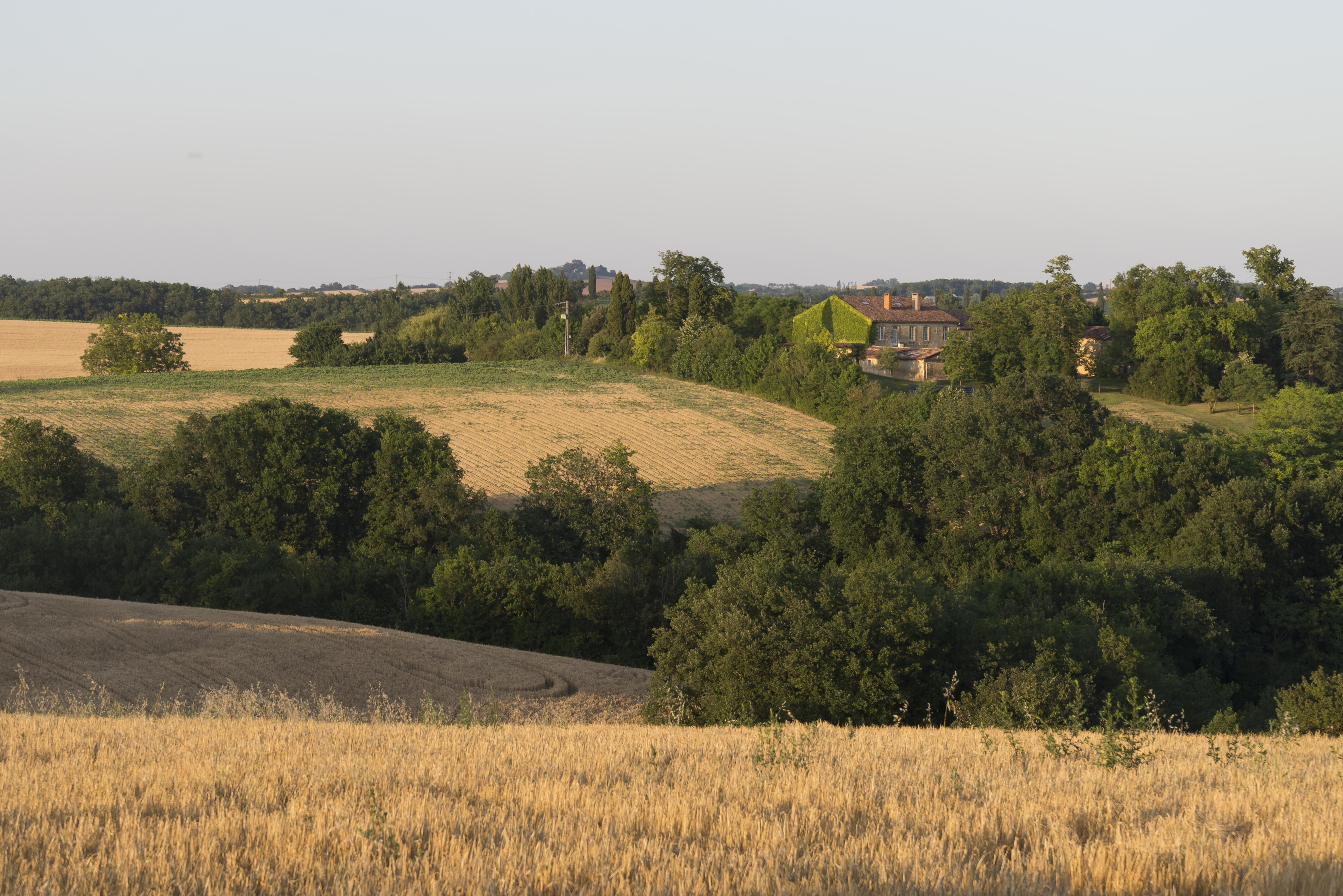 CAR_9101 vue des champs
